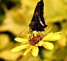 Butterfly by Pammiesphotography