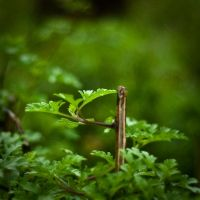 Plant and bokeh by GrapixD3