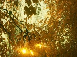 In the fall... by AlisaTamna