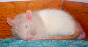 Albus is Sleeping by Clarice