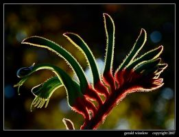 Red and Green by GeraldWinslow