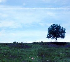 Lonely Tree 5 by Iulia-Oprinesc