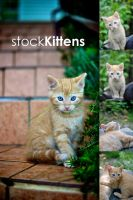 stock Kittens by zmeden