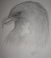 eagle by KatieConfusion
