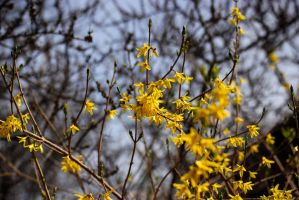 Yellow Flowers by SerpentSapiens