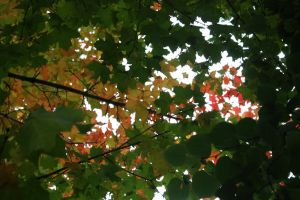 Unedited Autumn Leaves by AndehDulac