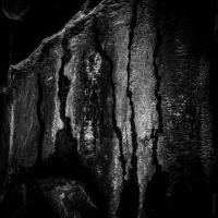Scars by tholang