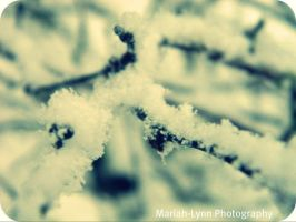 Snowy Day by MariahLynnPhotograph