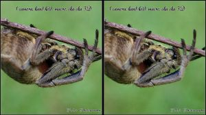Spider 3D crossview with only 1 camera by zippy6234