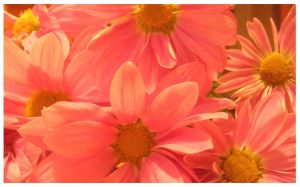 Beautiful pink flowers 1 by x-miss-drawings-x