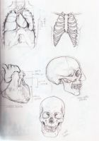 Anatomy references by Hellas-Antares