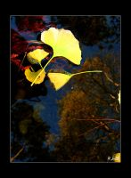 + Ginkgo by silentglaive