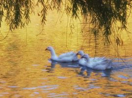 In the golden lake by kanes