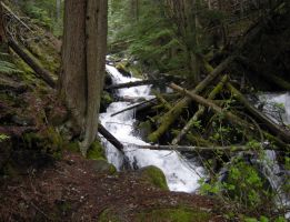 STOCK - Forest River 1 by jocarra