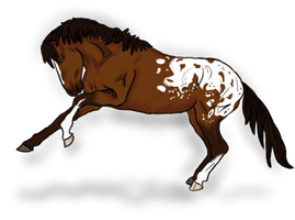 Bay Appaloosa Mustang Adoptable  CLOSED by LilWolfStudios