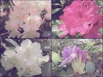 4 in One Photo edit colour change by blackroselover