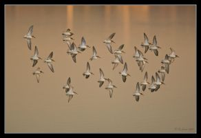 Formation XXXI by q-118
