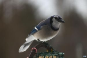 Blue Jay Way 2 by LifeThroughALens84