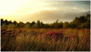 Golden Bog Sunset 2 by younghappy