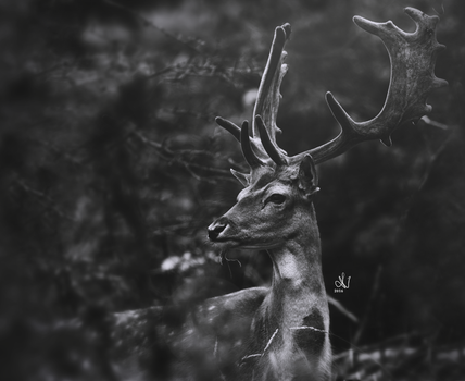 Enchanting deer by LikeMeggie