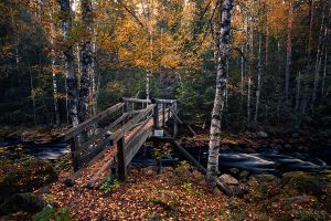 Bridge to deep forest by m-eralp