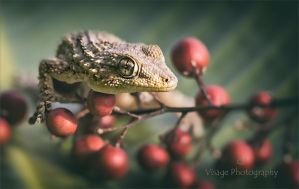 Red Berry Gecko by GJ-Vernon