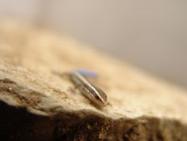 Baby Blue Tailed Skink by Devoral