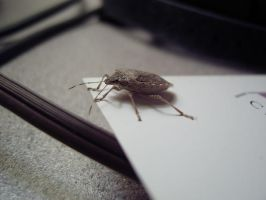 Am I bugging you? by gigatwo
