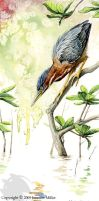 Green Heron Watercolor Study by Nambroth
