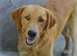 East Valley Animal Shelter 9 by Deliquesce-Flux