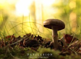 mushrooms 4 by D3vilusion