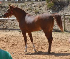 IndyStock15 by BlueBird-Stock