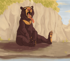 sun bear by starsweep