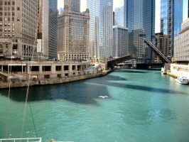 Chicago by Cattle