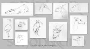 Zoo sketches by Arithar