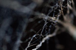 Tangled web 2 by mpw3d