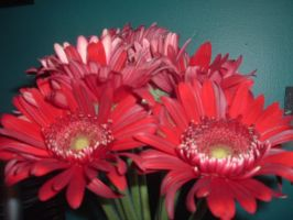 Red Carnation Series by sickcatstock