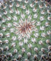 Round Cactus by crotafang