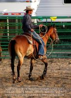 Rodeo 13-25 by AstriexEquineStock