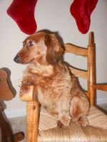 Dog in a Rocking Chair by willow1894