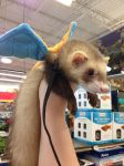 Charizard Ferret Costume by Glacideas