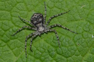 Stock: Little spider by Think-Outside-Of-Box