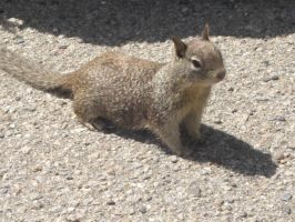 Squirrel1 by SquishyPandaPower