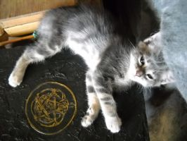 the cat on the Book of Shadows by ulalume999