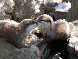 Otter Kisses by Michelle-xD