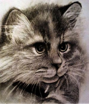 cat by mariosso2