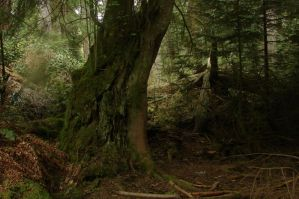Dense Forest 09 by Miffliness-Stock