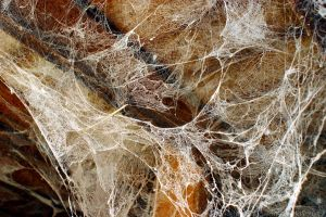 Spider webs 2 by Fire-Fuel