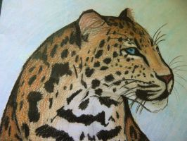 Leopard by I-just-want-to-be-Mi