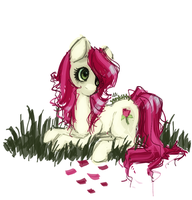 Roseluck by yunkitty